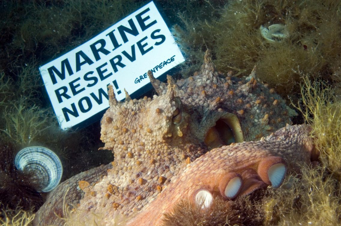 Mediterranean octopus with marine reserves placard ©Gavin Newman / Greenpeace